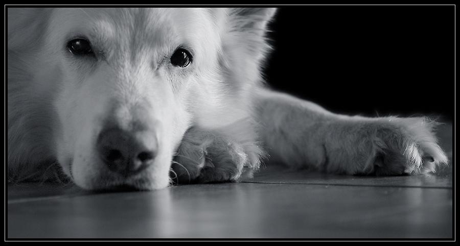 best friend II