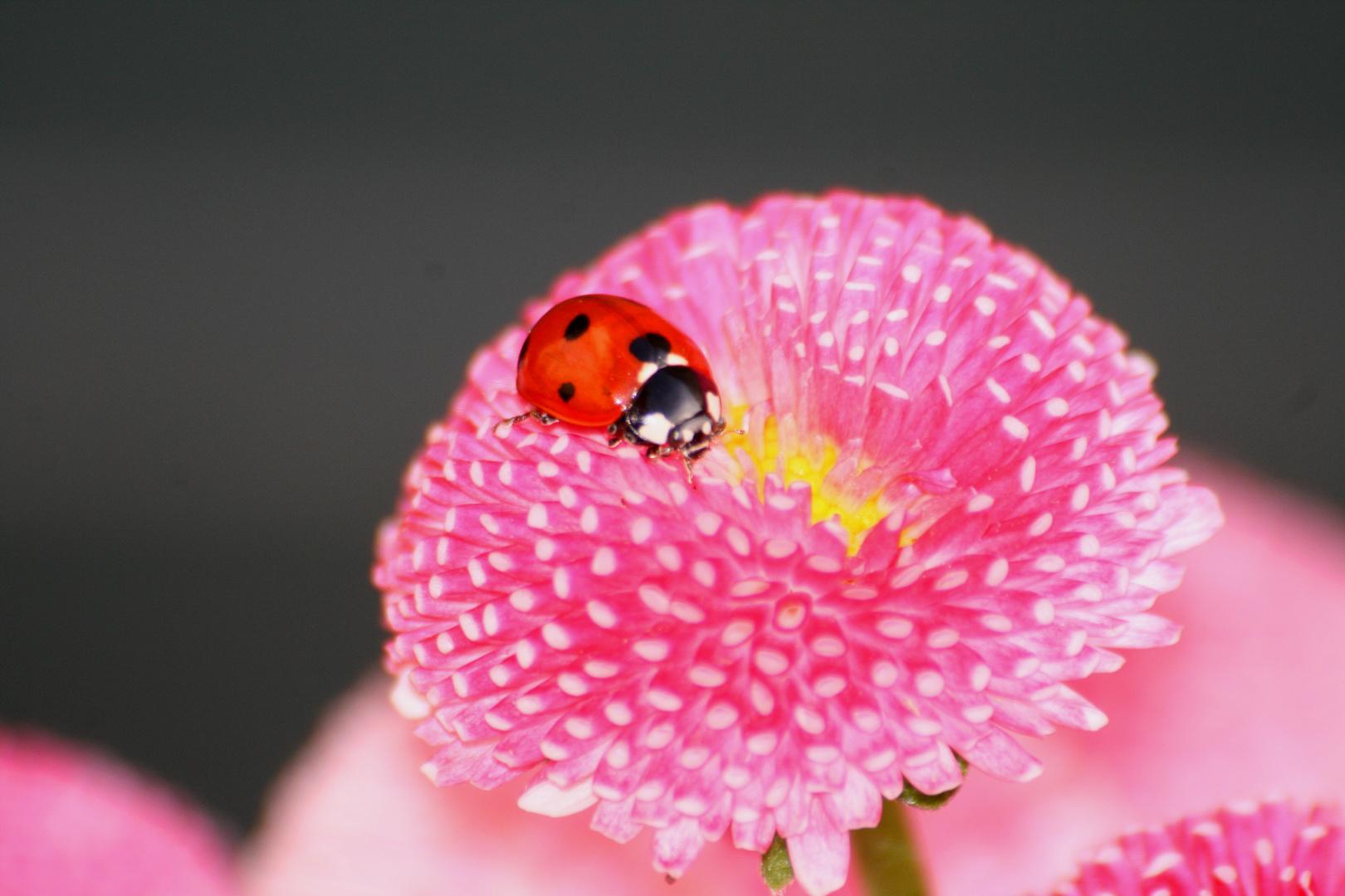 Besuch auf der Blume