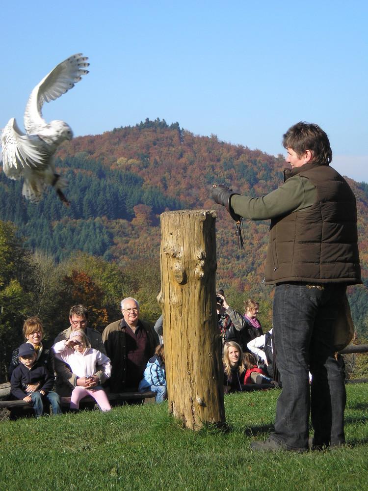 Besuch auf der Kasselburg