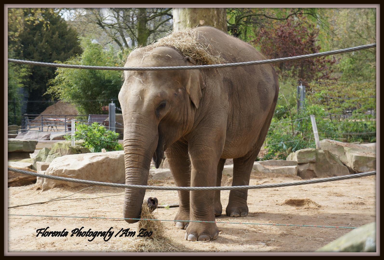 Besuch beim Zoo