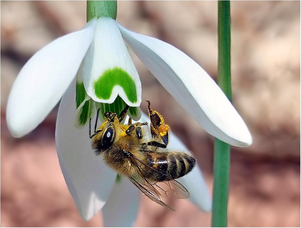 Besuch der Biene am 18.2.2007 !!! unglaublich