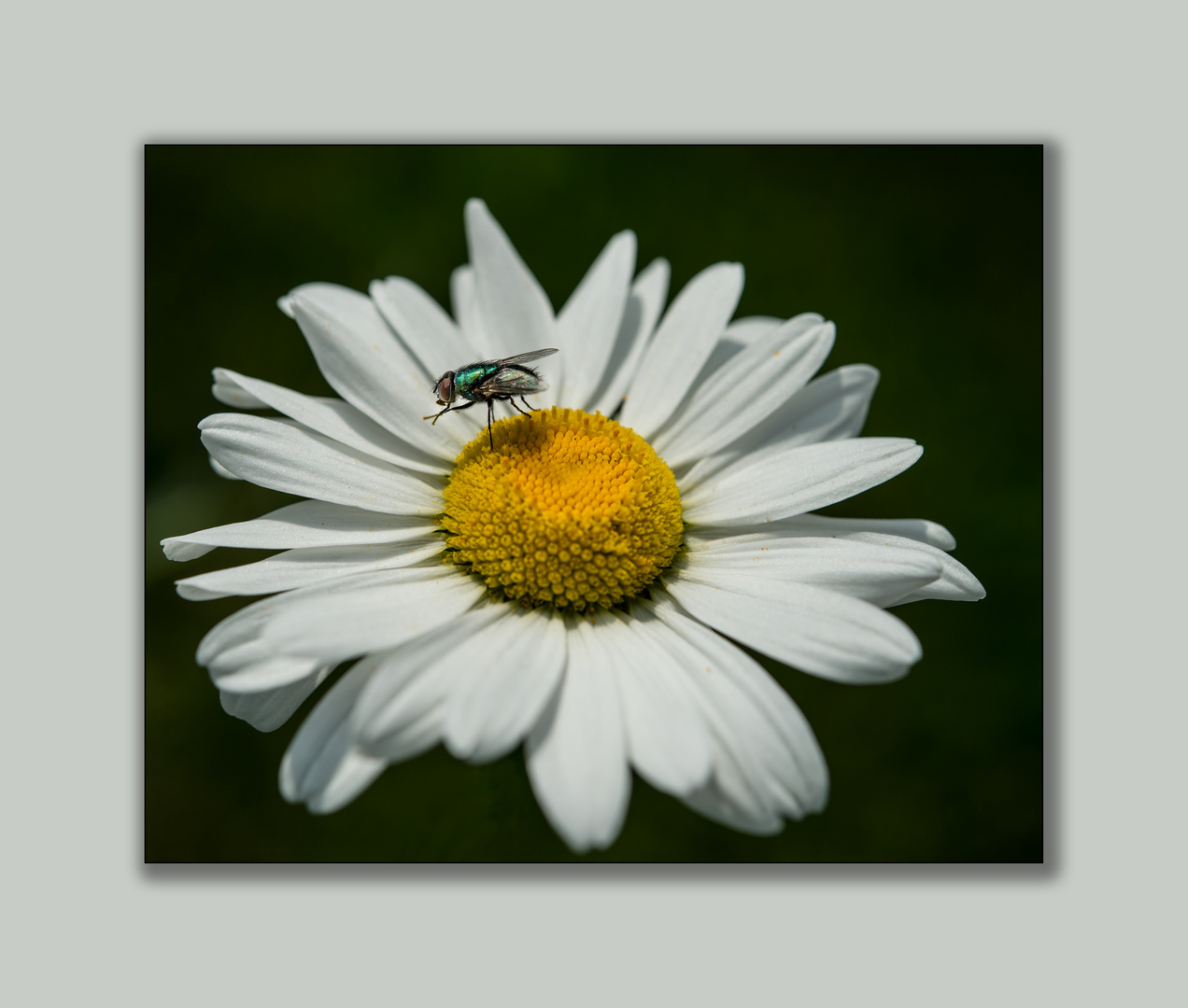 Besuch einer Fliege