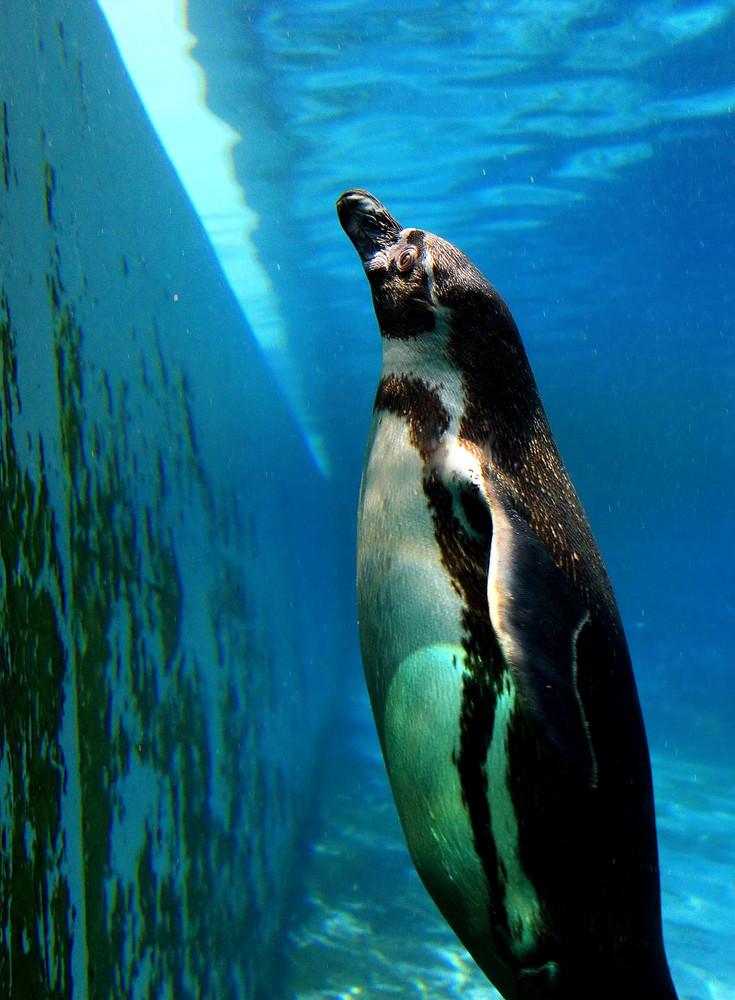 Besuch im Bochumer Tierpark #3