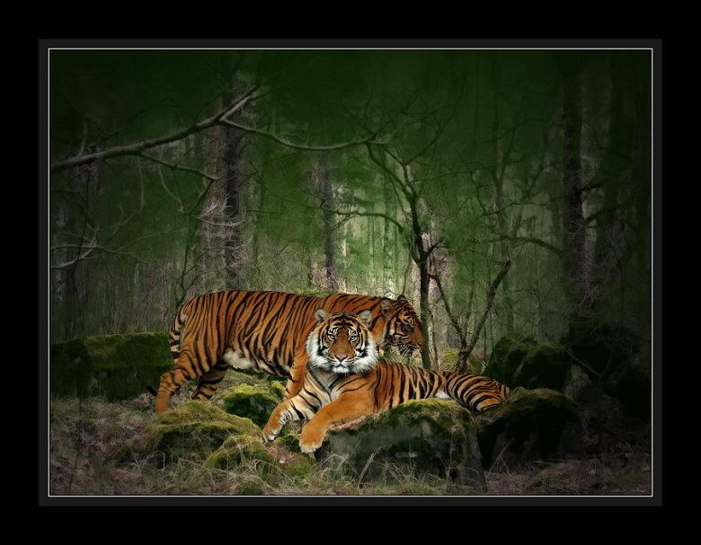 Besuch im Dschungel