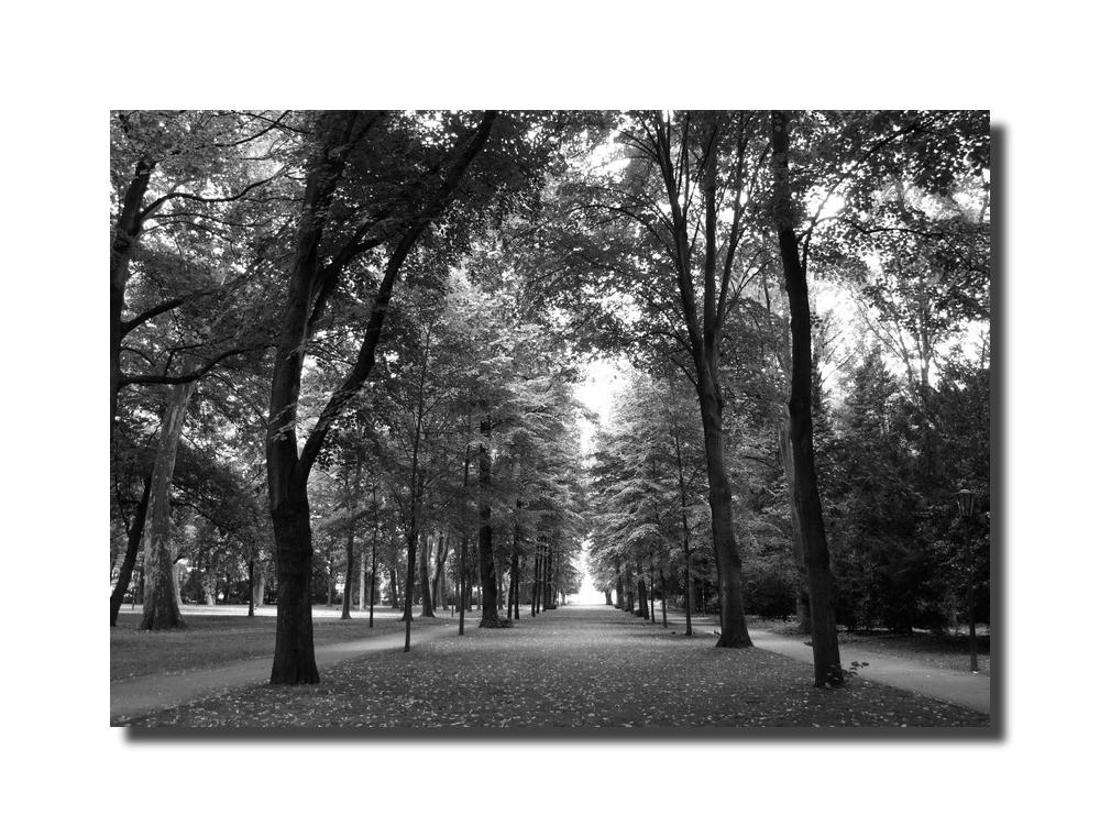 Besuch im Hofgarten