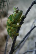 Besuch im Reptilium in Landau