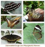Besuch im Schmetterlingshaus (2)