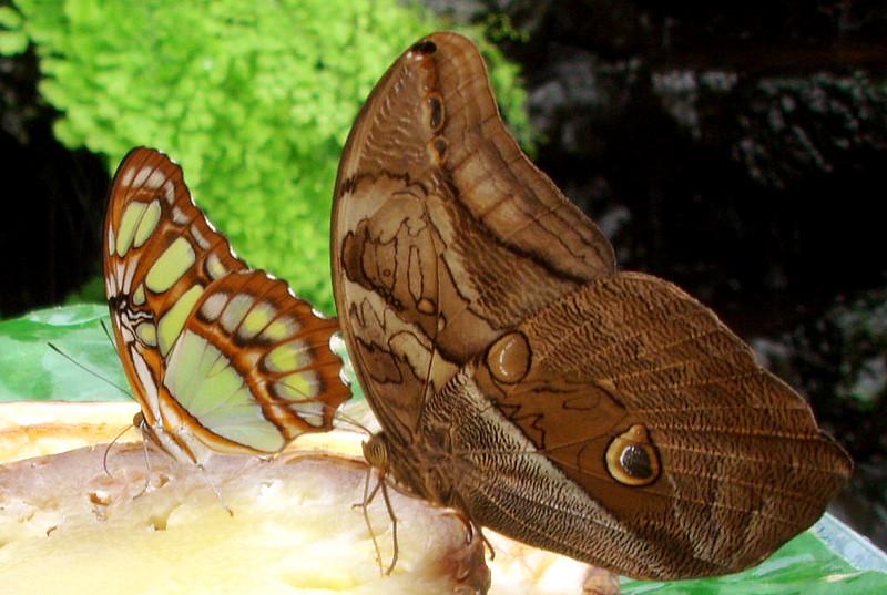 Besuch im Schmetterlingspark