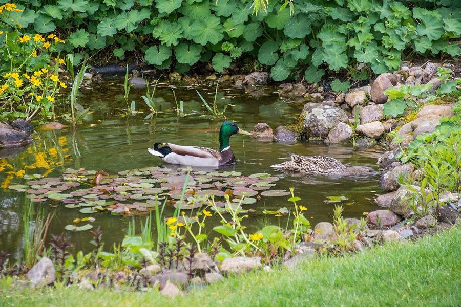 Besuch im Teich!
