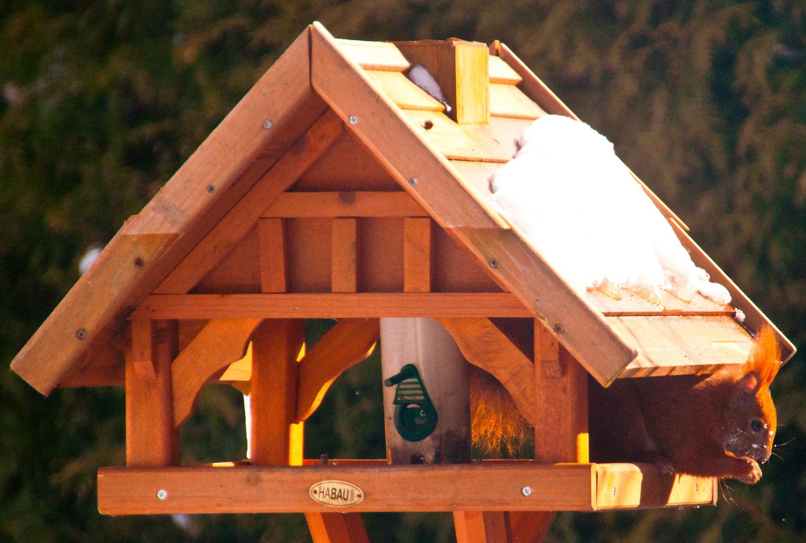 Besuch im Vogelhaus