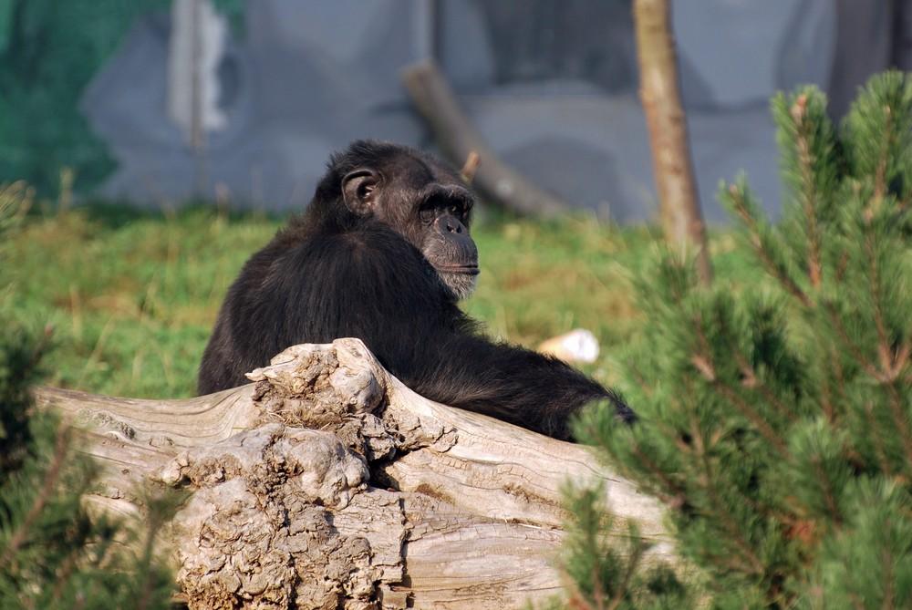 Besuch im Zoo Neuwied