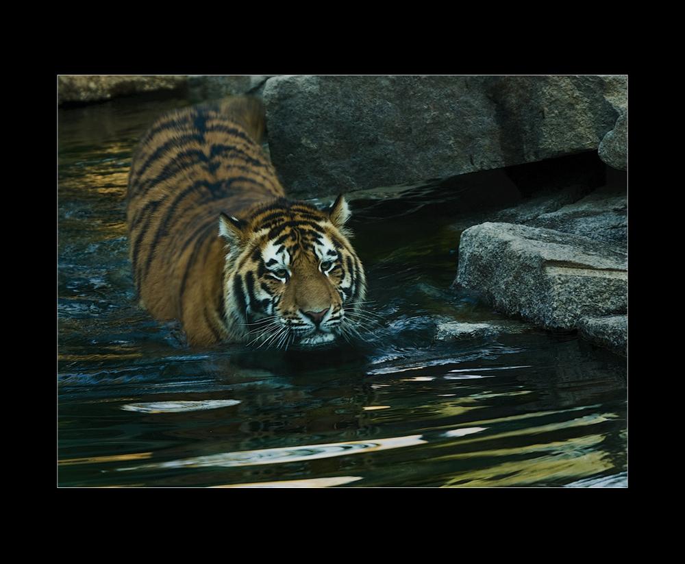 Besuch im Zoo von Mulhouse (9)