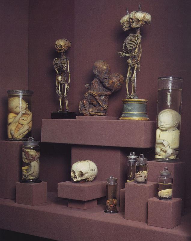Besuch in einem Museum für Gerichtsmedizin und Forensik