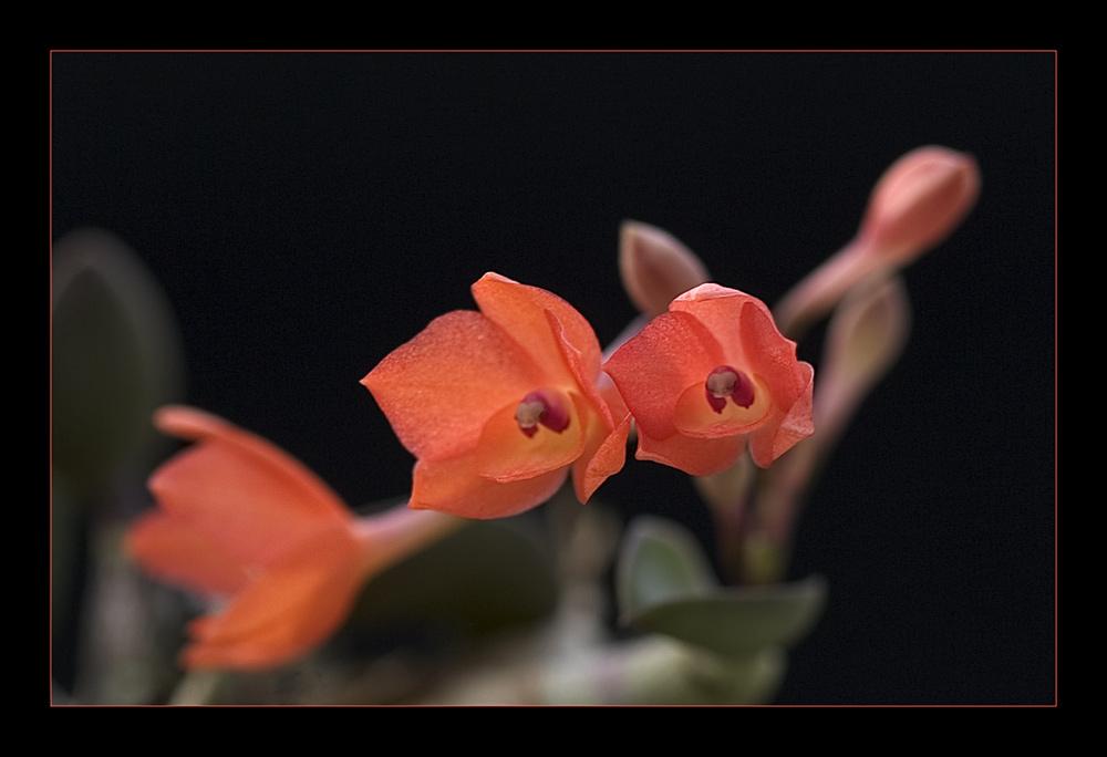 Besuch in einer Orchideengärtnerei (10)