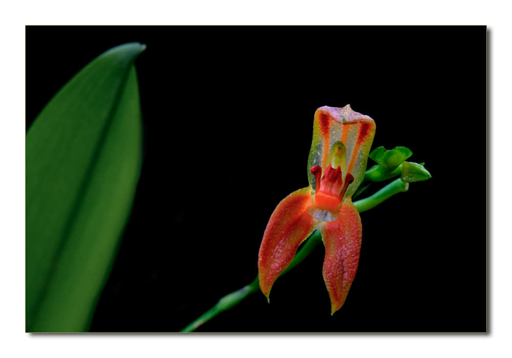 Besuch in einer Orchideengärtnerei (36)