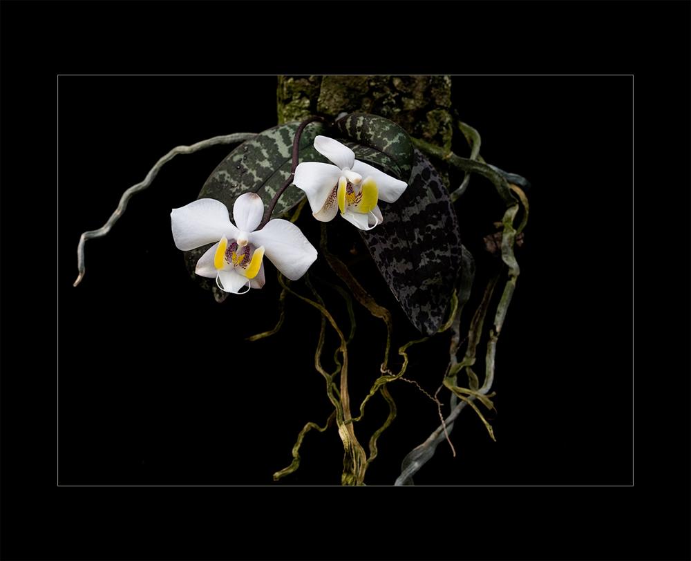 Besuch in einer Orchideengärtnerei (66)