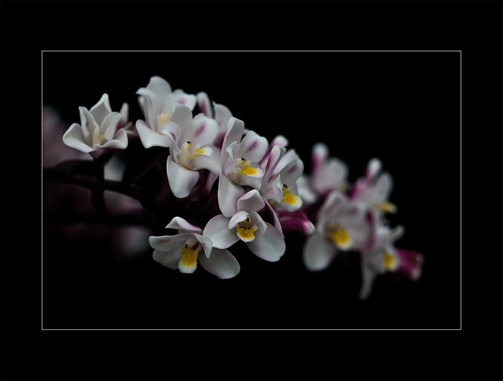 Besuch in einer Orchideengärtnerei (78)