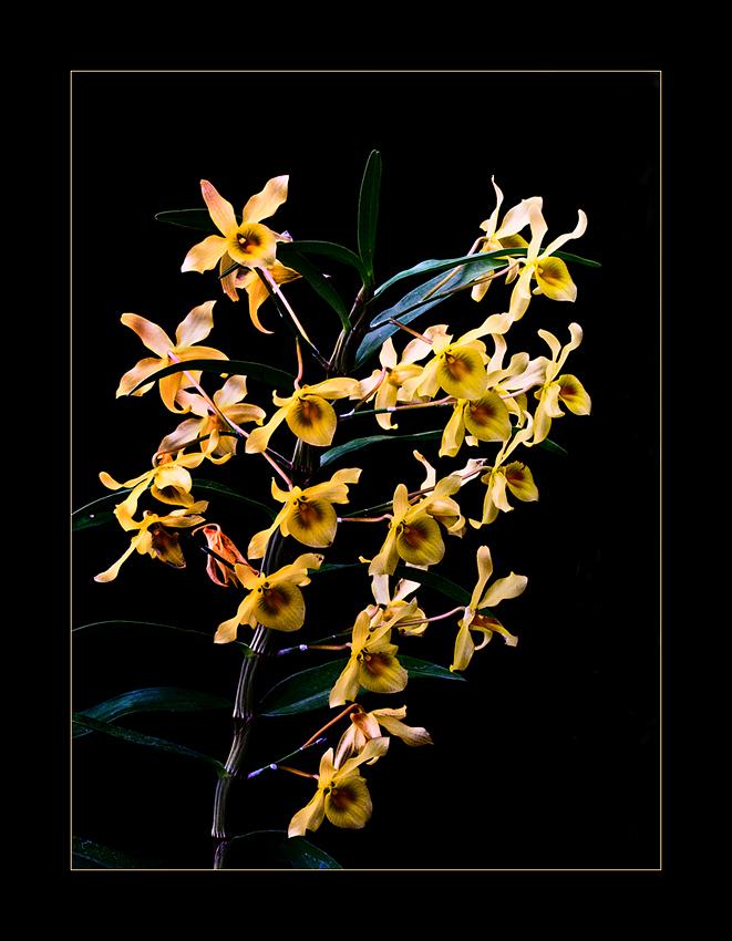 Besuch in einer Orchideengärtnerei (79)