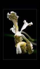 Besuch in einer Orchideengärtnerei (84)