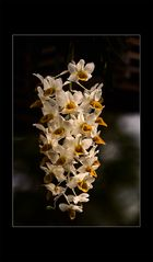 Besuch in einer Orchideengärtnerei (85)