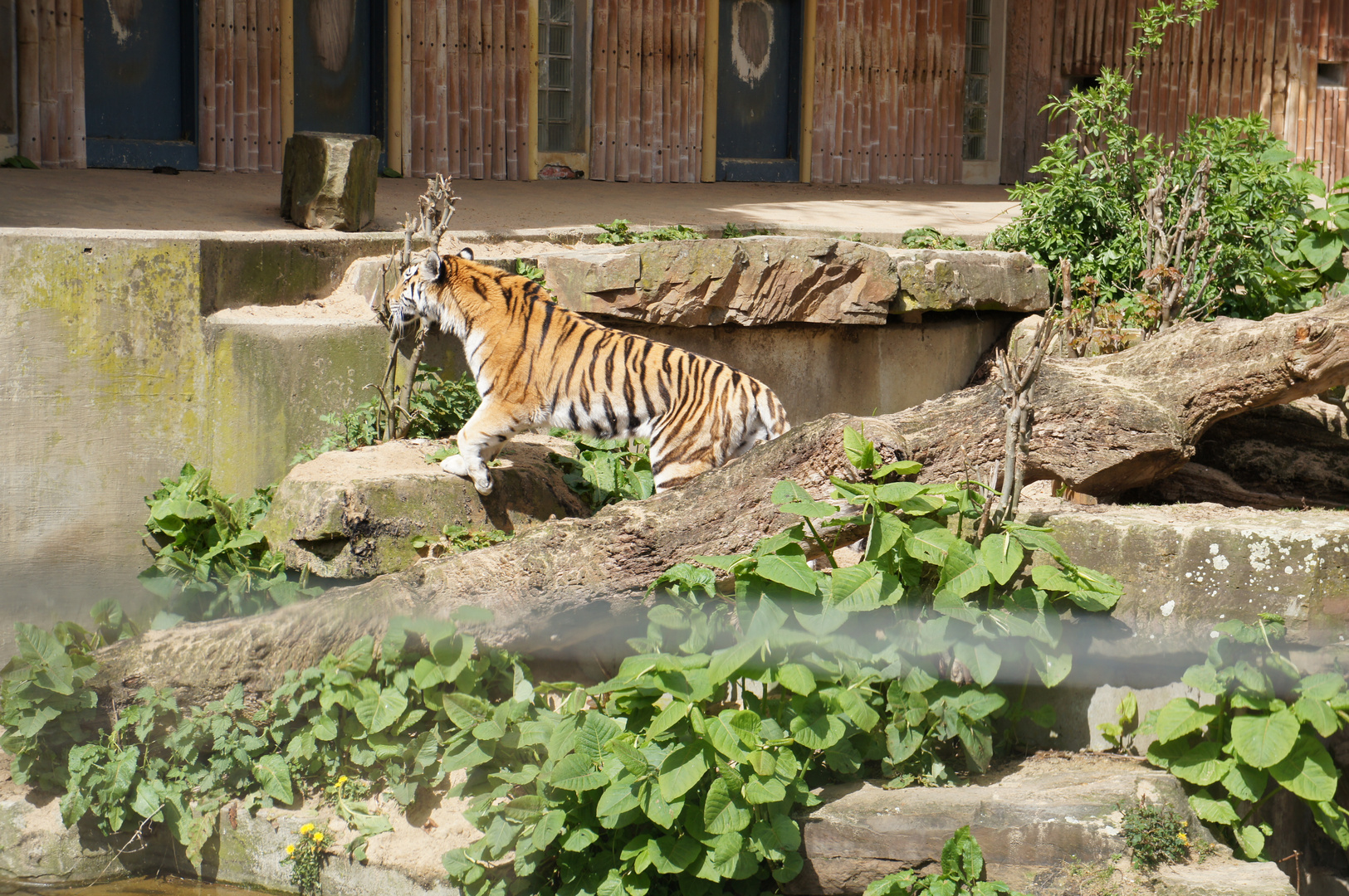 Besuch zoo