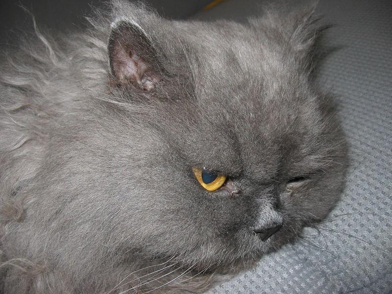 Besucher Katze Berti auf dem Sofa...