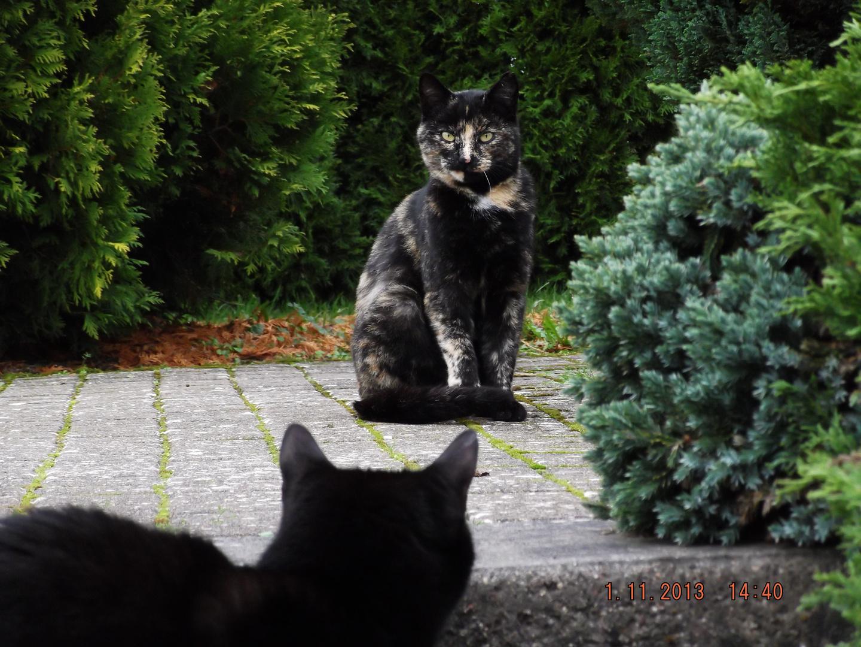 Besucher unserer 4-6 Katzen ;-)