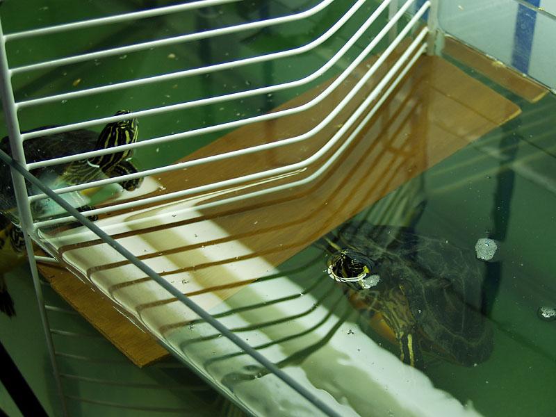 Besuchszeit im Schildkrötenknast