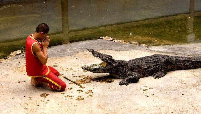 Beten hilft. Man muss nur fest dran gleuben. Samut Prakan Krokodilfarm