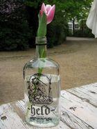betrunkene Tulpe
