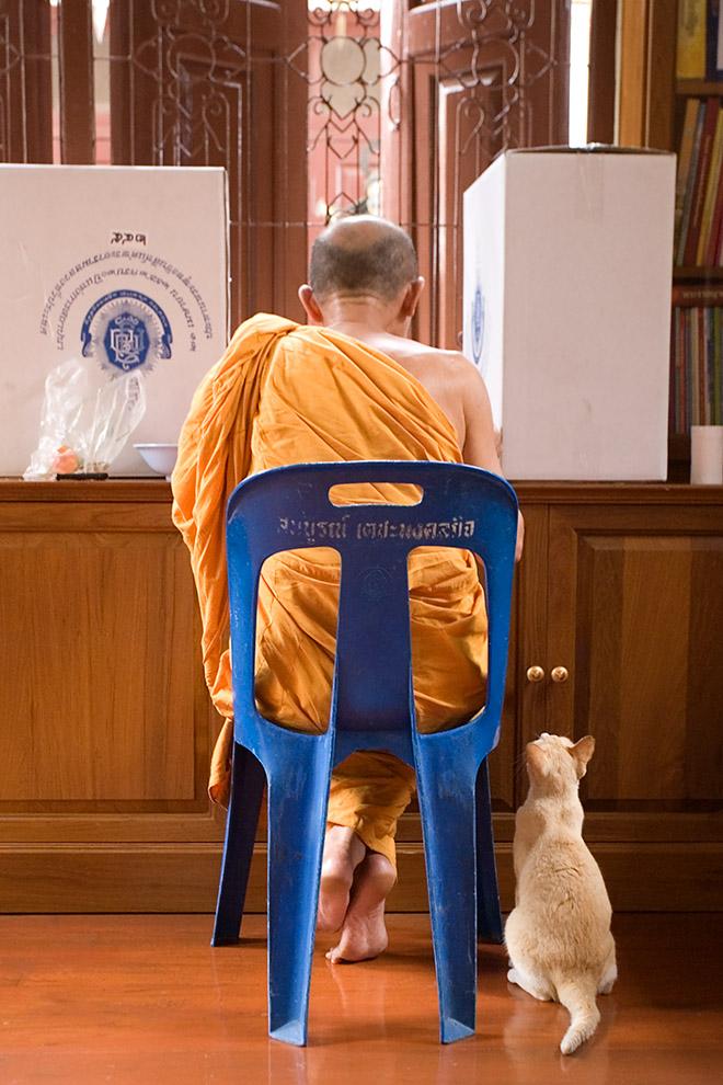 Bettelkatze mit Mönch