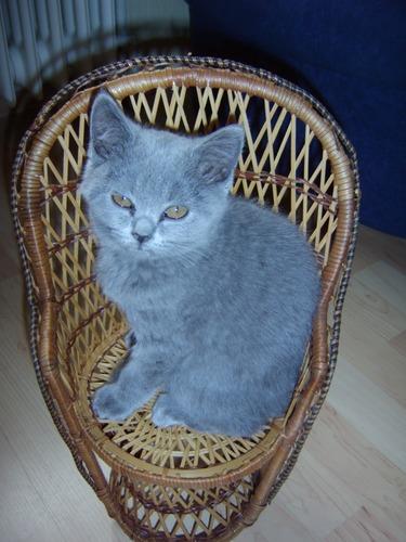 Betty auf Stuhl