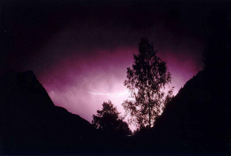 betula pendula vs. lightning