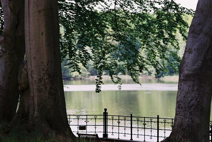 betweentrees