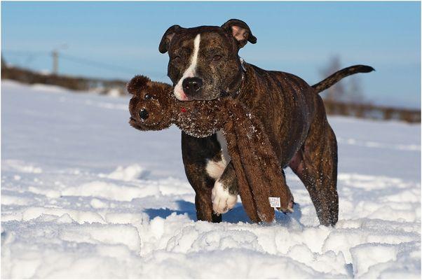 Beutegreifer Hund :-)