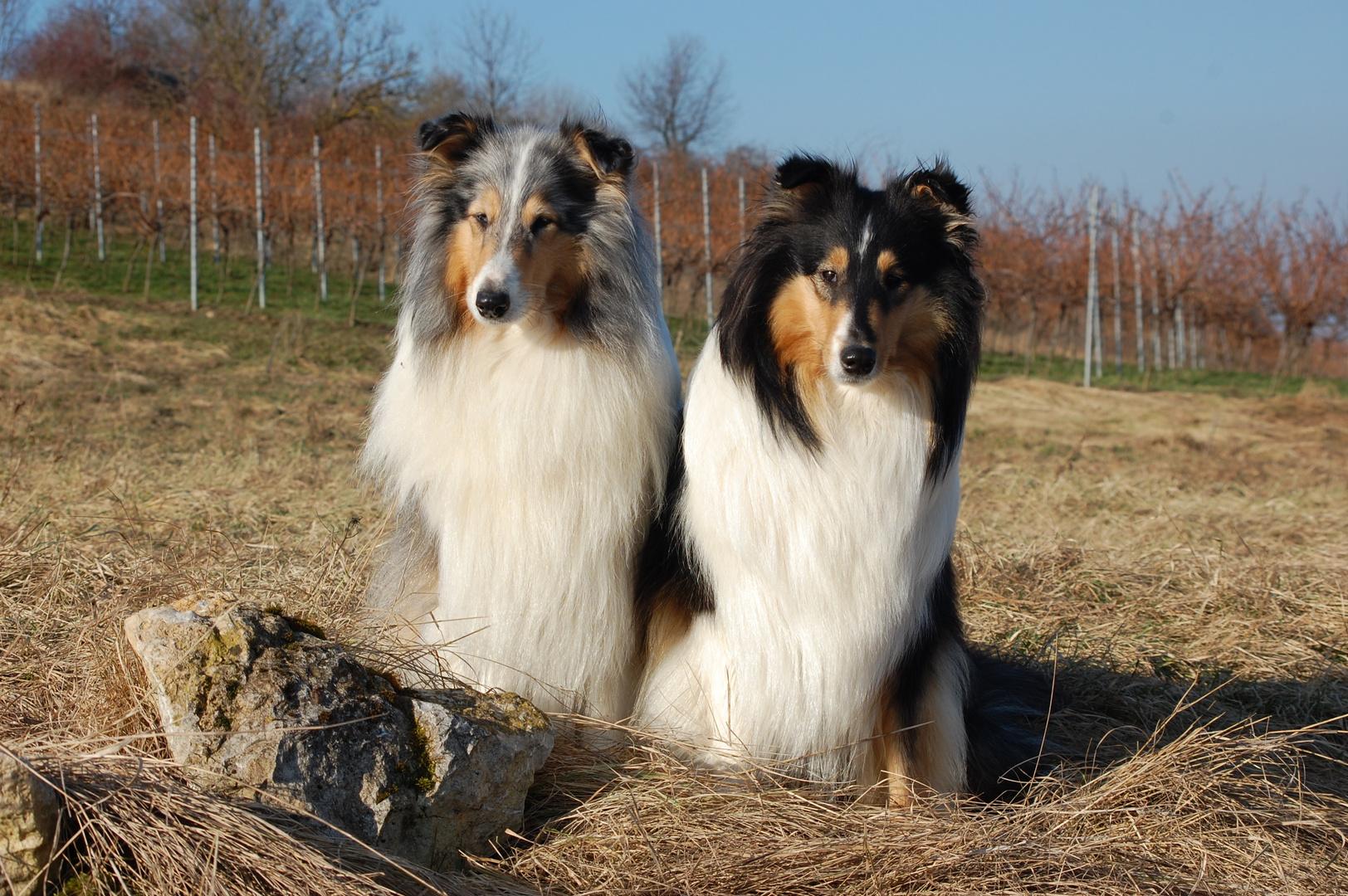 Beverly und Dasha