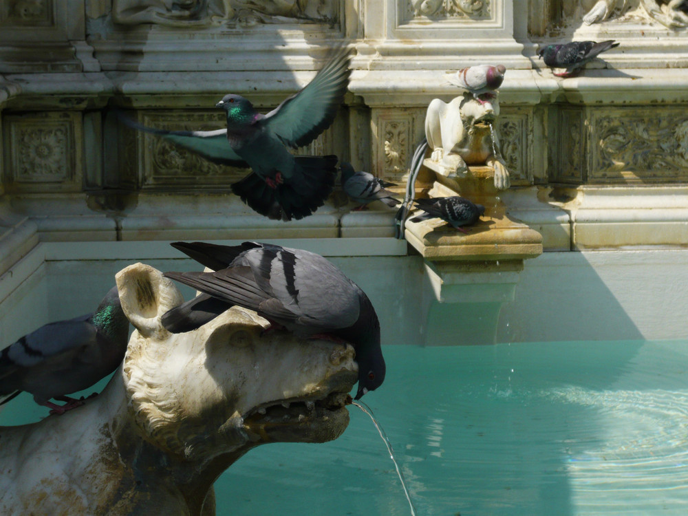 beviamo alla fontana