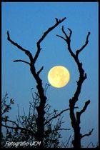 Bevor der Mond sich schlafen legt...
