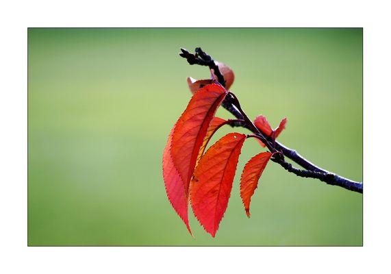 ...bevor die letzten Blätter fallen...