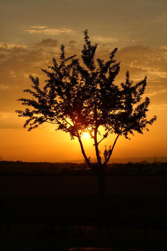 Bevor die Sonne untergeht