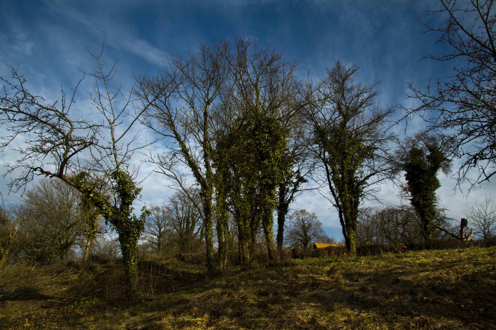 Bewachsene Bäume