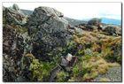 Bewachsene Felsen in 700m Höhe