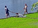 Bewässerung eines Reisfeldes in Bangladesch