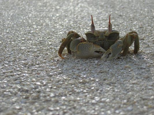 Beware of the crab!