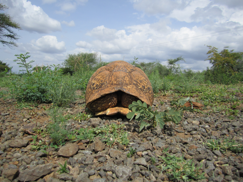 Beware of the turtles