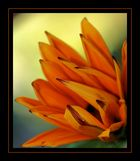 Bewegliche Blume