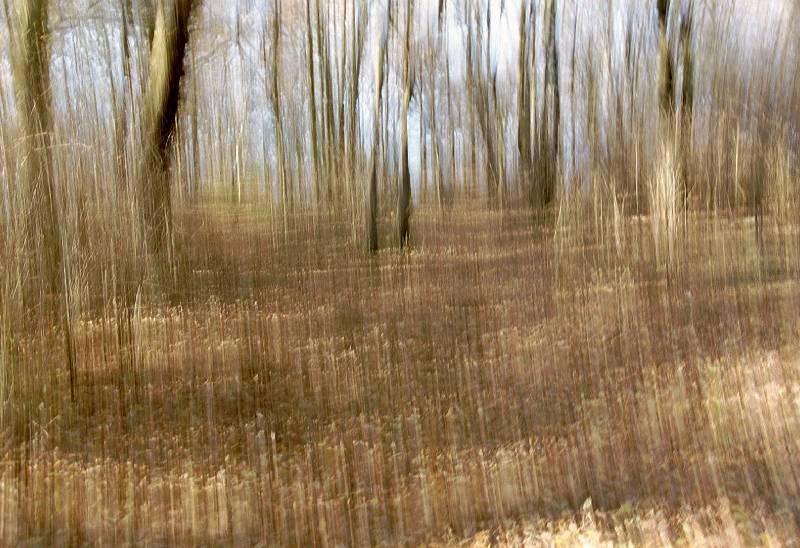 Bewegte Bäume