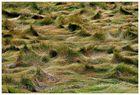 bewegtes Gras