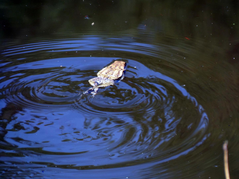 Bewegung im Teich