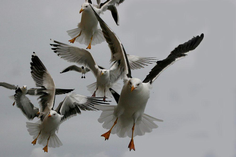 """Bewerbungsfoto für """"Die Vögel"""""""